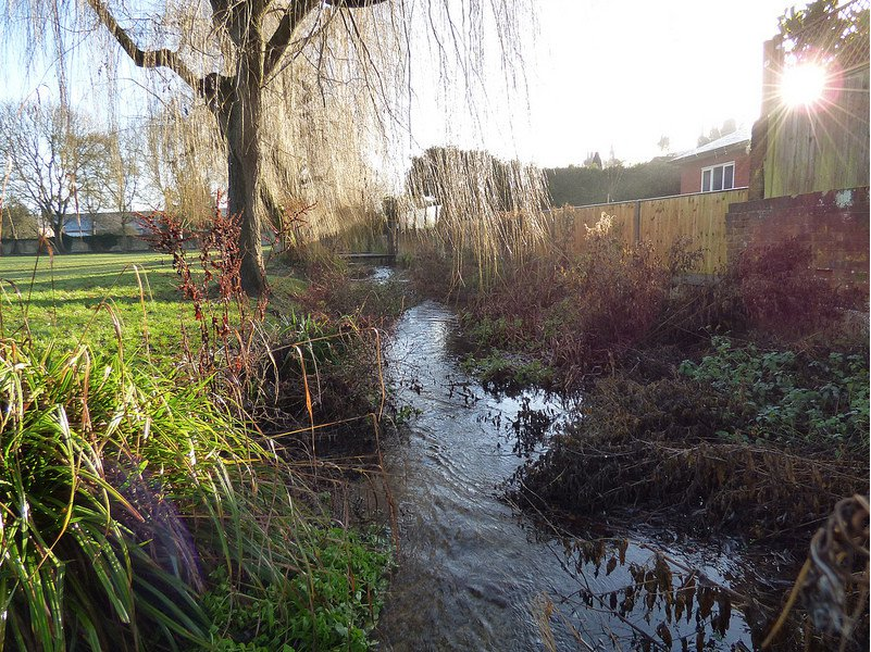 River Misbourne, Barn Meadow. Photo by John Suckling